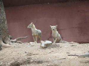 mammals15