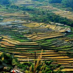 nagaland-tours-north-east-india