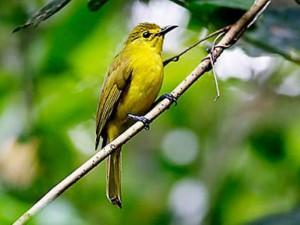 Major wildlife sanctuaries and reserves of Andhra Pradesh