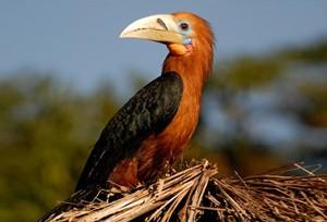 namdapha birds