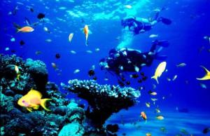new scuba diving at Agatti Island Lakshadweep