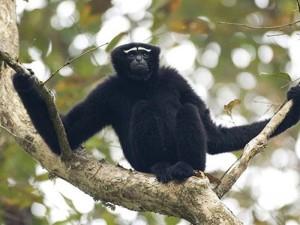 ngengpui wildlife sanctuary 3