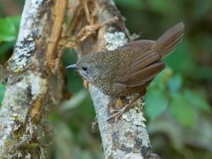 ngengpui wildlife sanctuary 5