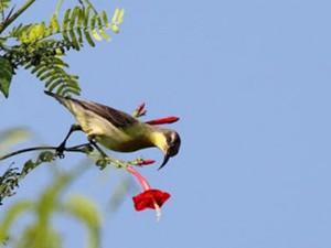 ngengpui wildlife sanctuary 8