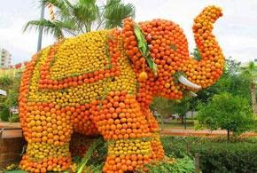 orange tourism festival 681