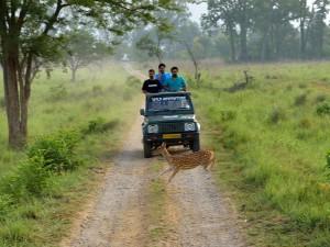 phawngpui national park 6