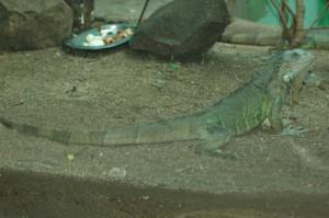 reptiles61