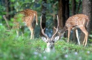 sepahijala wild life