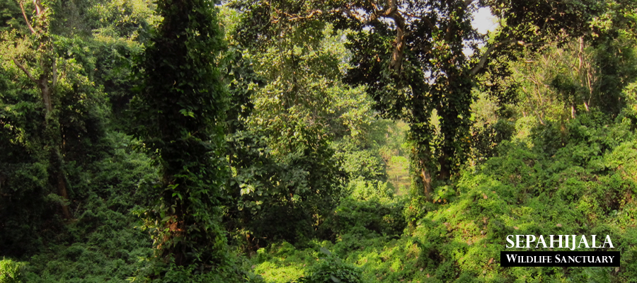 Wildlife Sanctuaries in Tripura