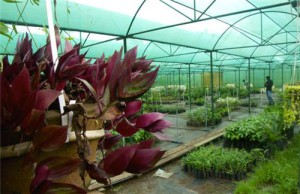 sippighat agriculture farm horticulture