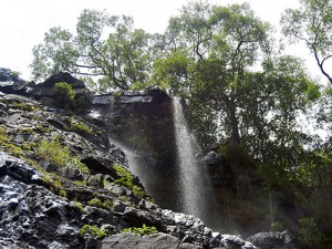 sri venkateshwara national park 5