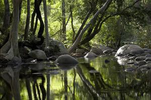 Chinnar Forest Kerala