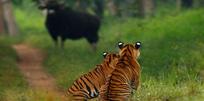 Gomarda Wildlife Sanctuary