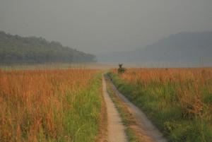 Grasslands at Jim Corbett National Park