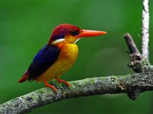 Karnala Bird Sanctuary 4