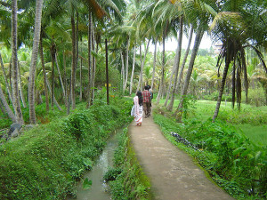 Kovalam palm grove