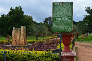 LalBagh Famous Tree Fossil