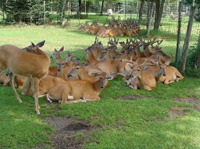 Malsi-Deer-Park (1)