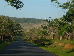 NH 67 through Bandipur