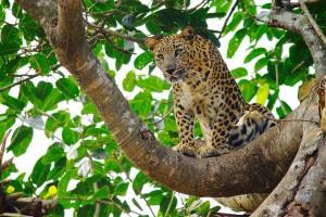 Nandankanan Wildlife   7
