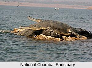 National Chambal Sanctuary Uttar Pradesh