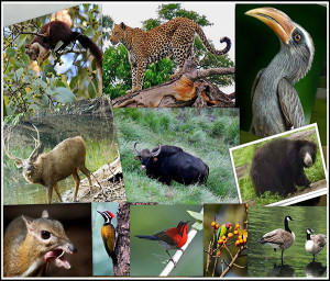 Radhanagari Wildlife Sanctuary
