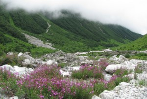 Valley of flowers National Park Uttrakhand India.