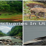 Wildlife-Sanctuaries-Uttarakhand