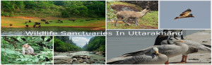 Wildlife Sanctuaries Uttarakhand