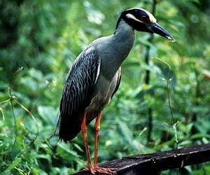 National Parks & Zoo in Uttarakhand
