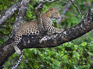 bhoramdev wildlife sanctuary 4