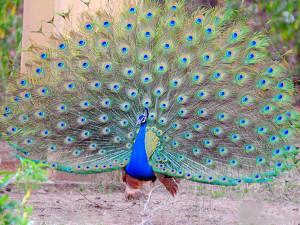 bhoramdev wildlife sanctuary 6