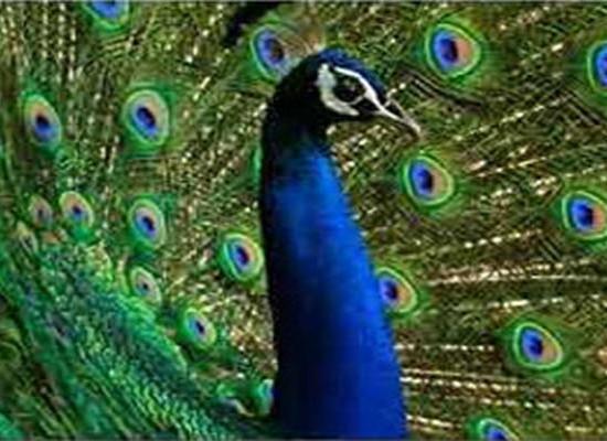 chinnar wildlife sanctuary munnar
