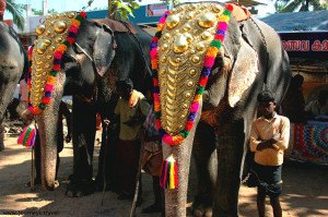 elephants pegeates