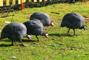 fowl bird wildlife sanctuary