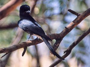kanger valley national park 4