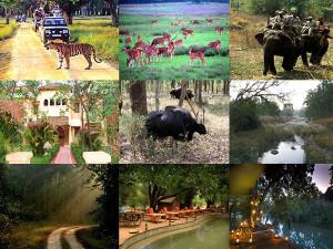 kanha national park images
