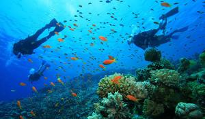 scuba diving tour to tarkarli with mumbai travellers