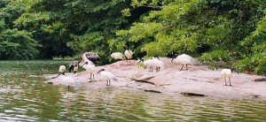 thattekad bird sanctuary cochin
