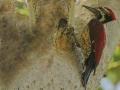 thumbs bhindawas bird sanctuary 1