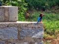 thumbs bhindawas bird sanctuary 11