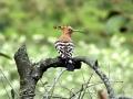thumbs bhindawas bird sanctuary 3