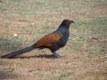 thumbs bhindawas bird sanctuary 4