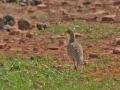 thumbs bhindawas bird sanctuary 5