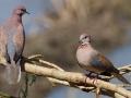 thumbs bhindawas bird sanctuary 7