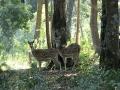 thumbs kalesar national park 9