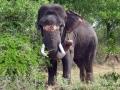thumbs nahar wildlife sanctuary 3