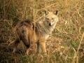 thumbs nahar wildlife sanctuary 4