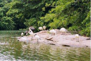 visit thattekad bird sanctuary
